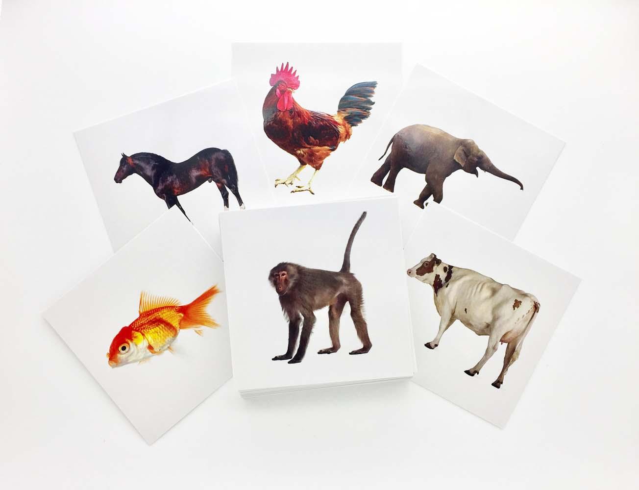 Buy Animal Flashcards - AutismSTEP