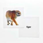 Animal Flashcards (Front & Back) Product Image