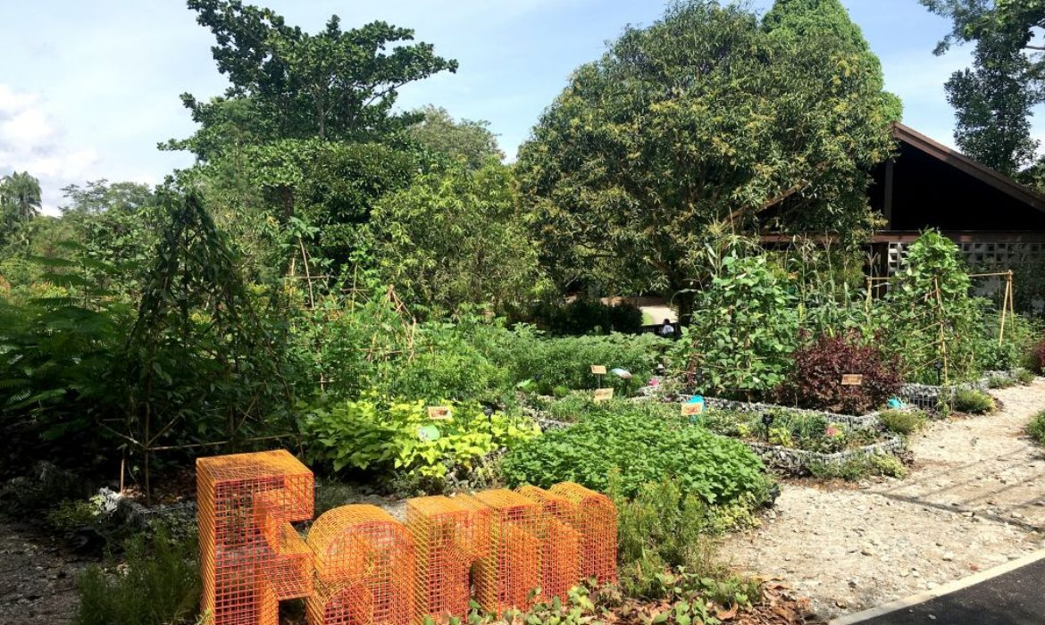 Jacob Ballas Children's Garden now largest in Asia after S$12 million extension which includes equipment that can also help children with autism to concentrate and focus